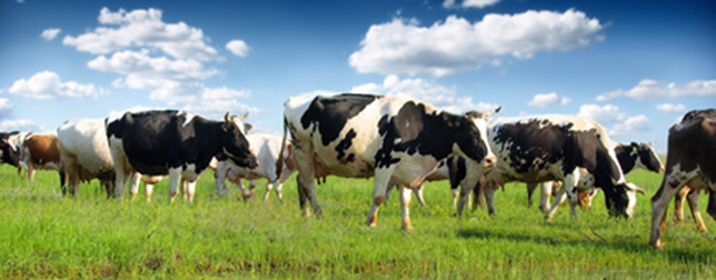 Happy Cows And Busy Bees Wearable Technologies