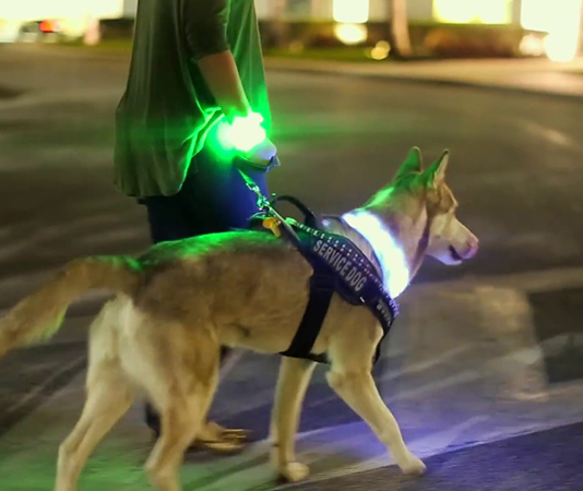 Homeland Security wearable for K9