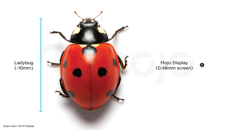 picture of a lady bug