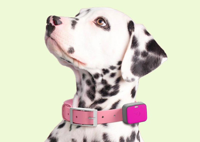 Whistle Wearables For Dogs