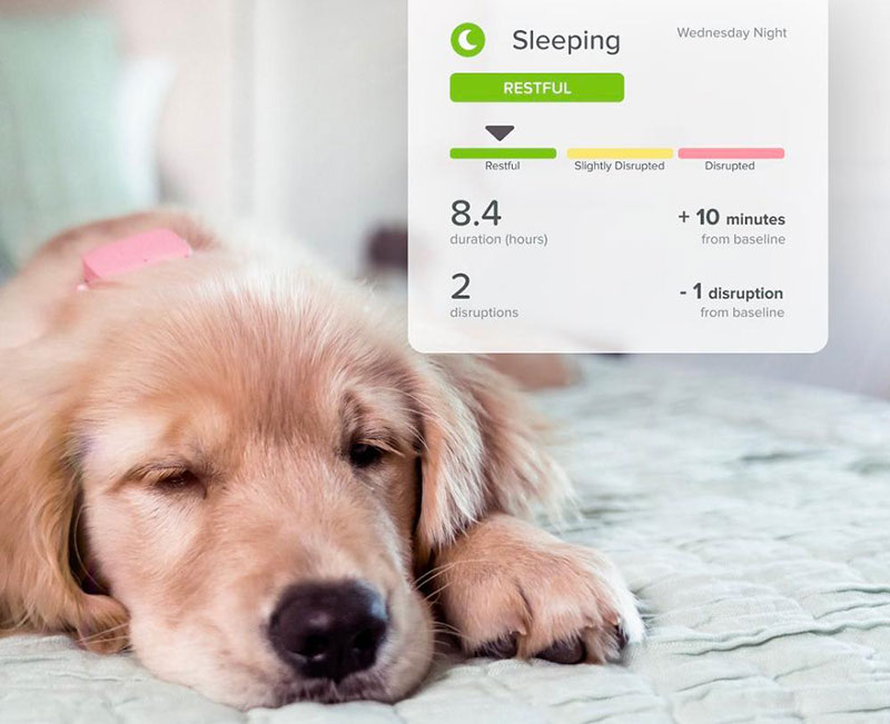 Whistle Wearables For Dogs To Keep Your Dog Healthy and Safe